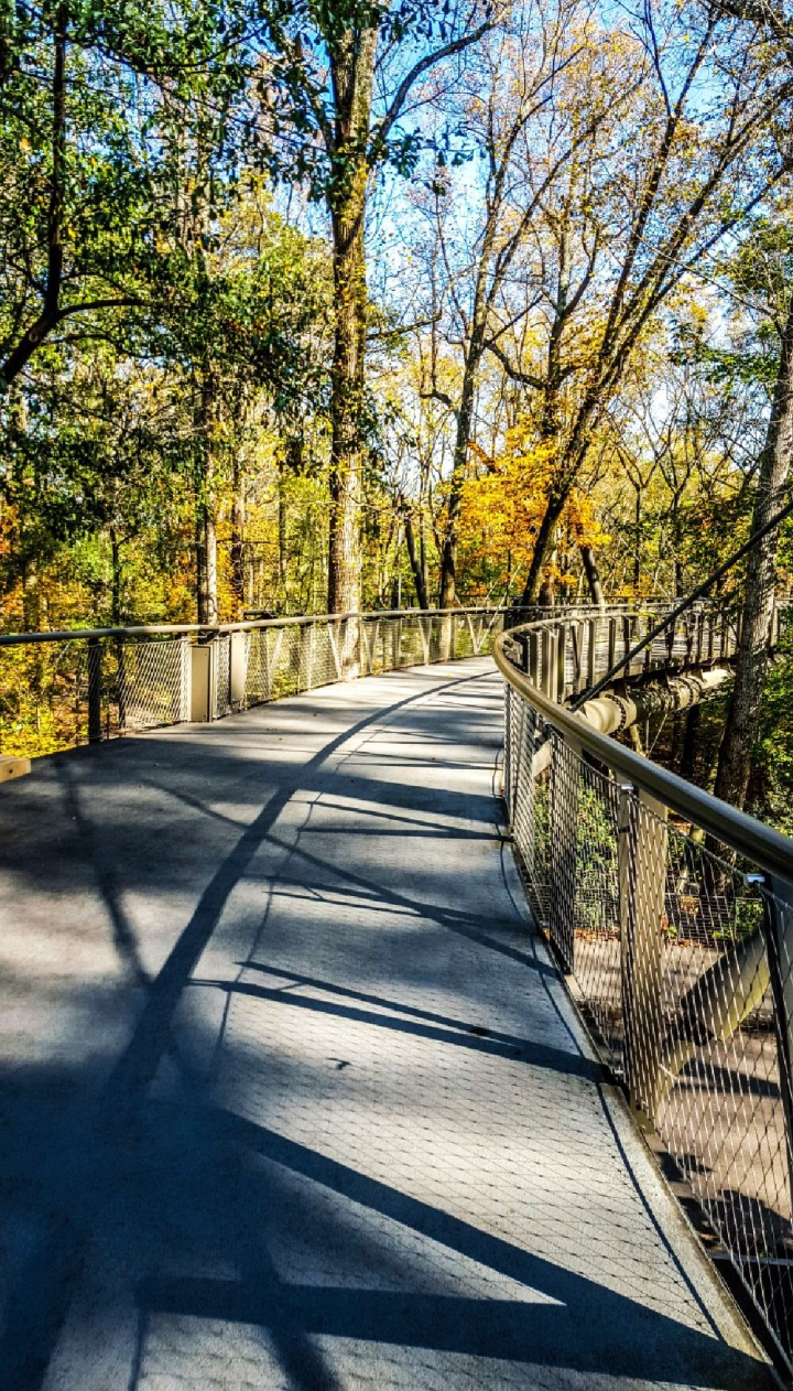 Kendeda Canopy Walk Atlanta Botanical Garden