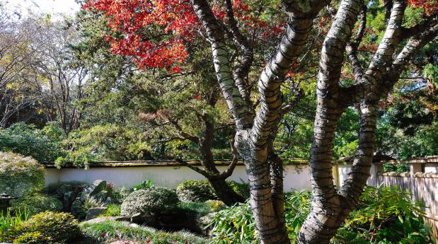 Japanese Garden Atlanta Botanical Garden