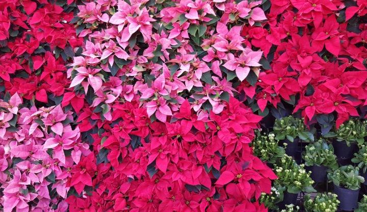 Pink flowers Atlanta Botanical Garden